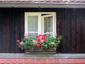 idyllic-little-window-1425735-m